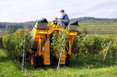 Grape Harvester — Stock Photo