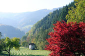 Autumn in the Black Forest — Stock Photo