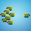 Stock Photo: Angelfish in difference way