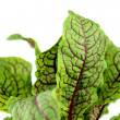 Sorrel — Stock Photo #23184566