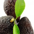 Avocados — Stockfoto #24704775