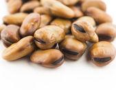 Fava beans — Stockfoto