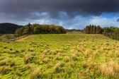 Farm animals in a grassland near a lake — Stock Photo