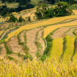 Terraces of rice — Stock Photo #15490423