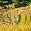 Terraces of rice — Stock Photo #15490423
