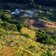 Royalty-Free Stock Photo: Rice terraces in the evening