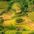 Beautiful green rice terrace contours — Stock Photo