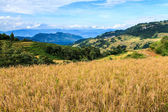 Rice terraces landscape — Stock Photo
