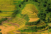 Beautiful green rice terrace — Stock Photo
