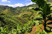 Banana plantation in the mountains — Stock Photo