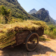 Stock Photo: Harvest on chariot near road side