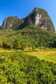 Orange trees plantation in a valley — Stock Photo