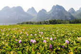 Li river landscape in South China — Stock Photo