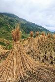 Krajina stohy sena, sušení na rýžových polí — Stock fotografie