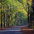 Autumn landscape of a road through the forest — Stock Photo