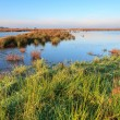 Wetlands landscape on a sunny day — Stock Photo