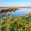 Wetlands landscape on a sunny day — Stock Photo