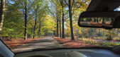 Road through a autumn forest — Stock Photo