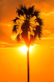 Orange glow sunset with a palm tree silhouette — Stock Photo