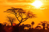 Orange glow of an african sunset — Stockfoto