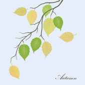 Green and yellow autumn leaves — Stock Photo