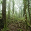 Mossy australian rainforest - Stock Photo