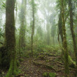 Stock Photo: Mossy australirainforest