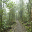 Cloudy rainforest. - Stock Photo