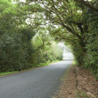 Empty road in cloudy rainforest — Stock Photo