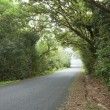 Empty road in cloudy rainforest - Stock Photo