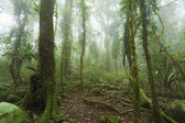 Mossy australian rainforest — Stock Photo