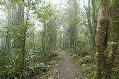 Cloudy rainforest. — Stock Photo