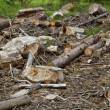 Deforestation close up — Stock Photo #22340917