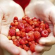 A handfull of wild berries — Stock Photo