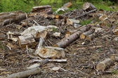 Deforestation close up — Stock Photo