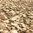 Dry riverbed — Stock Photo
