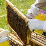 Beekeeper — Stock Photo #50377831