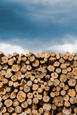 Industrial Timber — Stock Photo