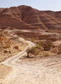 Road Through Negev Desert Hills — Stock Photo