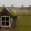 Stockfoto: One Odd Gull On Roof