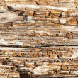 Stock Photo: Rotting Wood Close Up