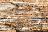 Rotting Wood Close Up — Stock Photo