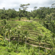 Hillside Rice Paddies On Bali — 图库照片