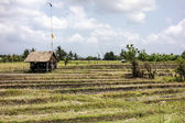 Bali Farm And Rice Paddies — Stock Photo