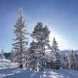 Trees On Ski Slopes With Sun — Стоковое фото