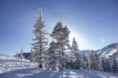 Trees On Ski Slopes With Sun — Stock Photo