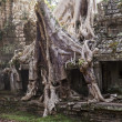 Spung Tree at Preah Khan Temple — Stock Photo