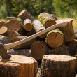 Axe With Chopped Wood — Stock Photo #7358663