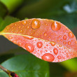Royalty-Free Stock Photo: Leaf with water droplets