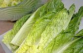 Romaine Lettuce — Stock Photo